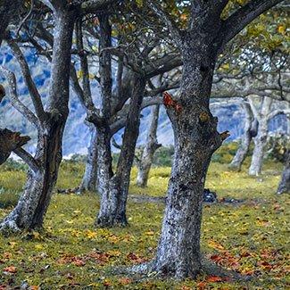 Захист дерев та кущів